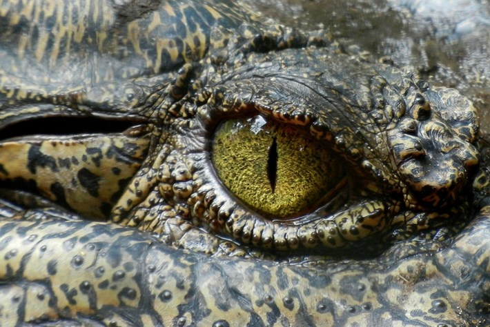 crocodile-eye_2016-10-14.jpg