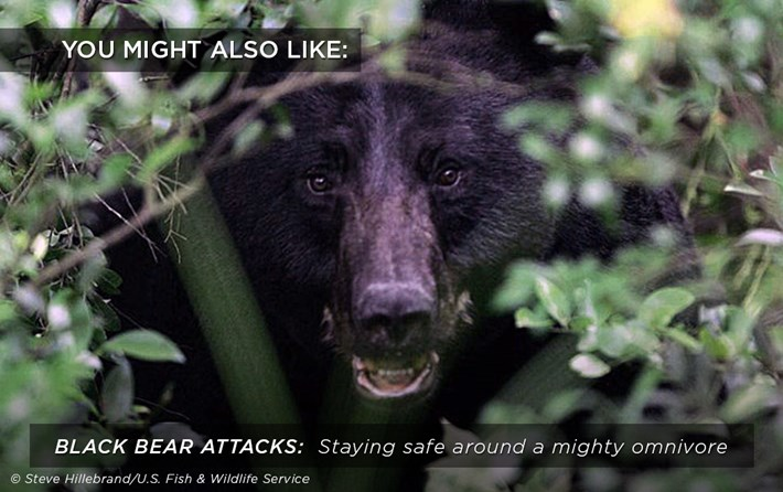 black-bear-attacks_related_26_01_18.jpg
