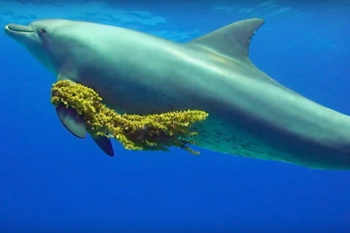 A rare glimpse into the world of the Red Sea's dolphins and whales
