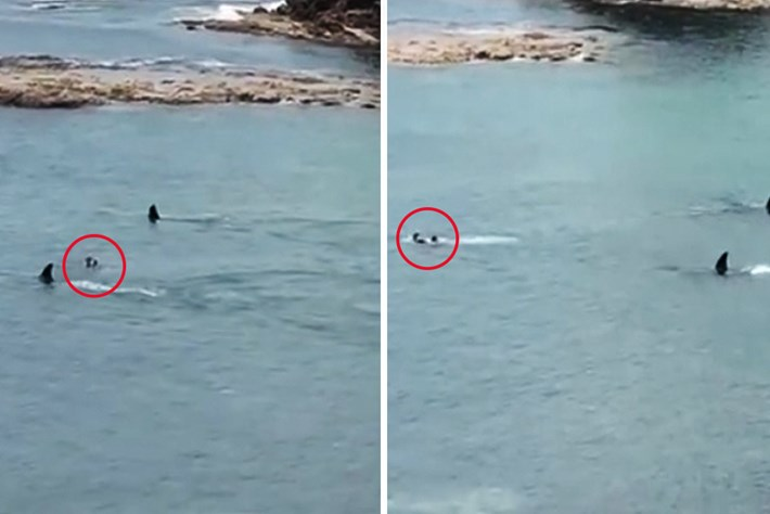 Watch: Orcas cruise within feet of bathers in New Zealand