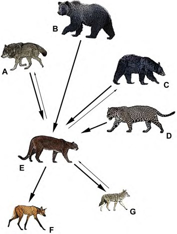 Are-pumas-subordinate-carnivores_2018-02-02.jpg