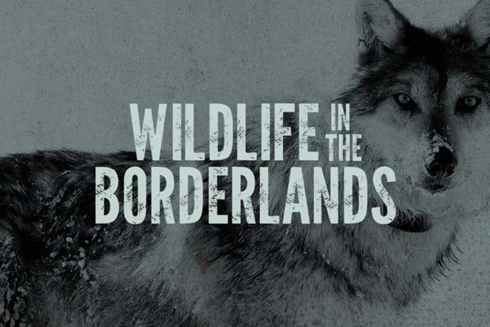 Wildlife-in-the-Borderlands_The-Lobo thumb_2018_02_07.jpg