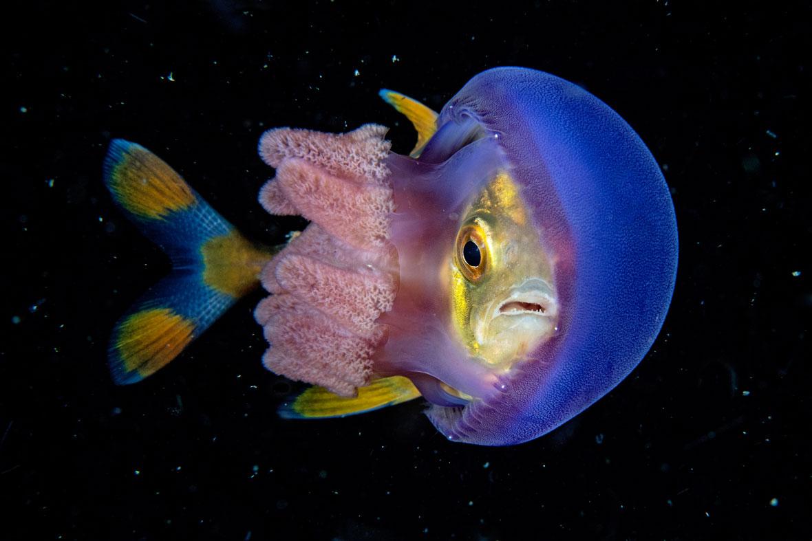 Scott-Tuason-jelly-fish-UPY-2018-02-14.jpg