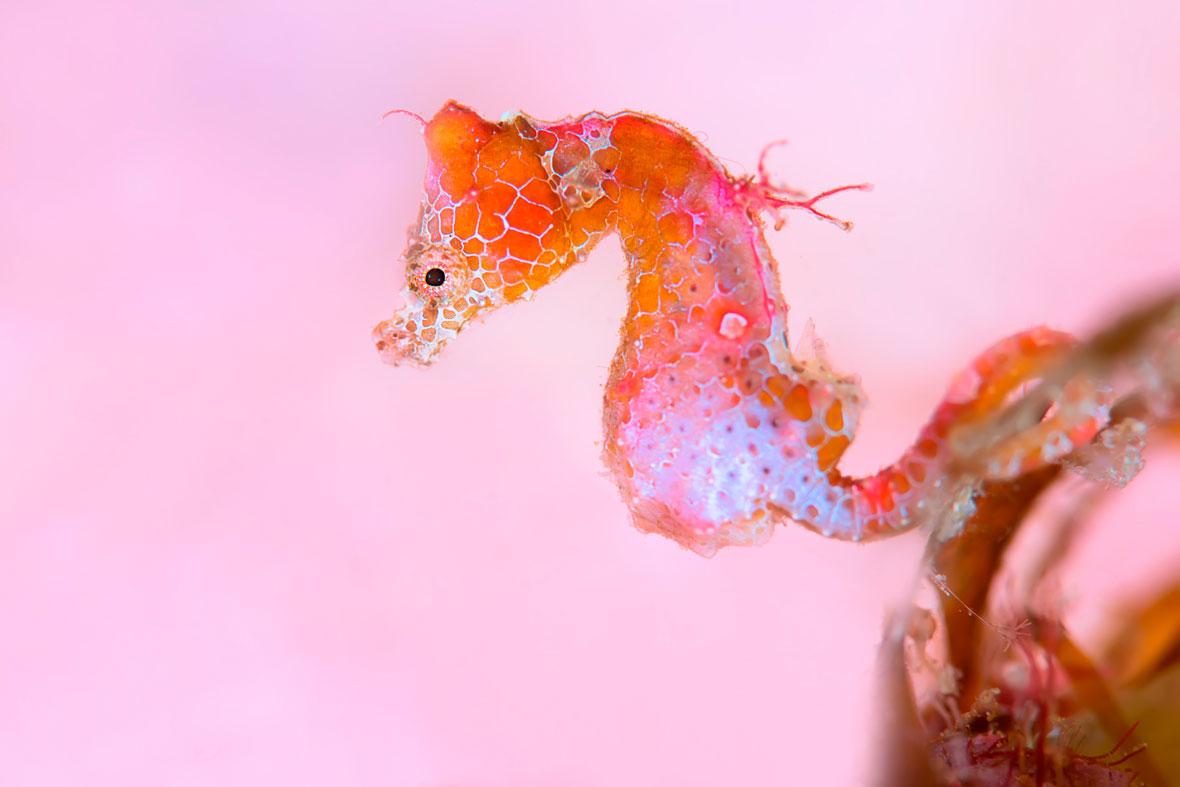 Tianhong-Wang-seahorse-UPY-2018-02-14.jpg
