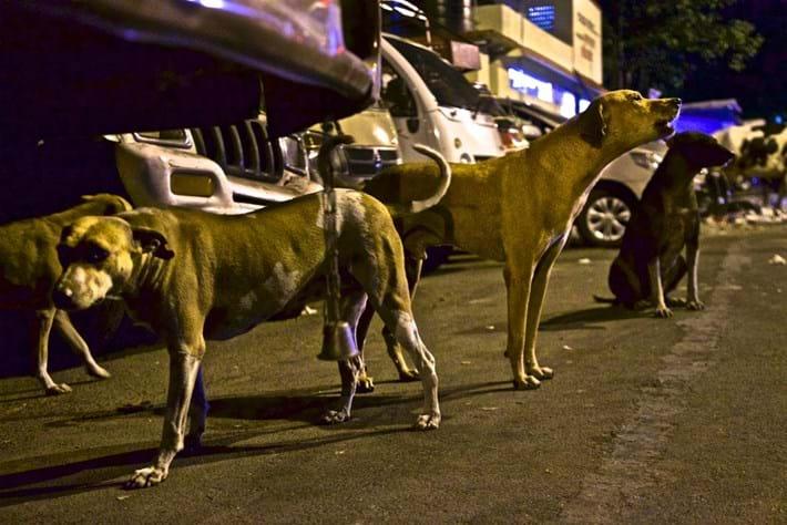 stray-dogs-Mumbai-2018-03-09.jpg