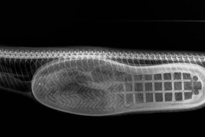 snake-slipper-2018-03-27.jpg