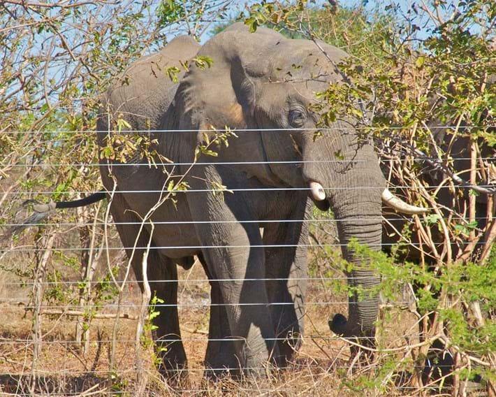 elephant-fence-2018-03-29.jpg