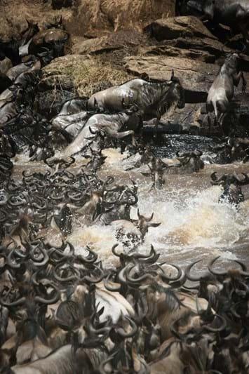 wildebeest-serengeti-migration-2018-03-29.jpg