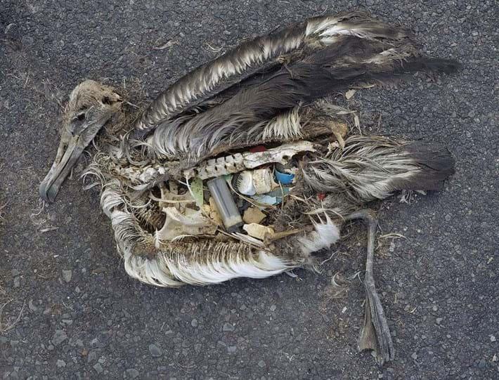 dead-albatross-plastic_2018-04-17.jpg