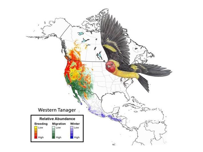 western-tanager-migration-pathways_2018-04-17.jpg