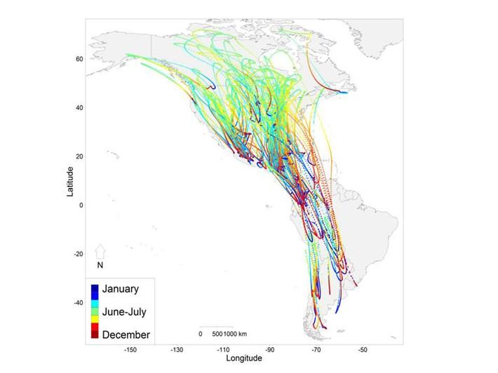 bird-migration-pathways_2018-04-17.jpg