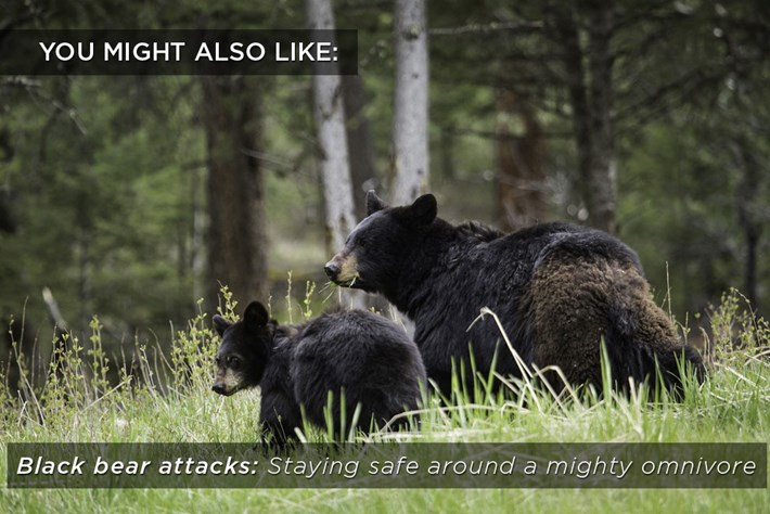 black-bear-related-2018-05-07.jpg