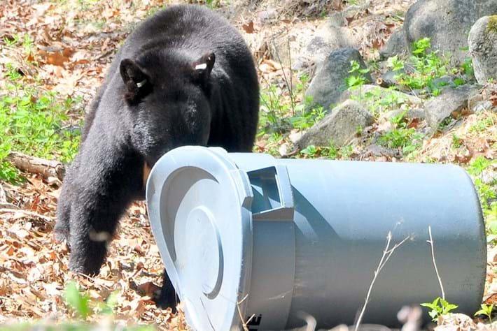 bear-trash_2018-05-07.jpg