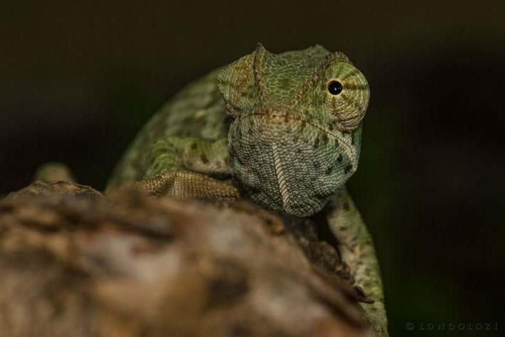 Chameleon-3_2018-05-08.jpg