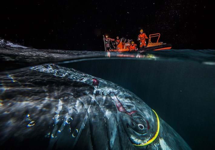 Audun-Rikardsen-whale-rescue_2018-05-28.jpg
