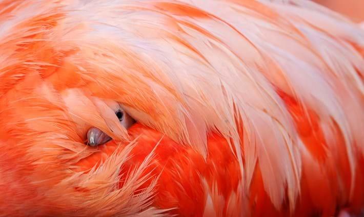 Claudio-Contreras-flamingo_2018-05-28.jpg