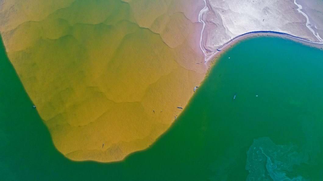 Chambal-river-India_2018-06-11.jpg