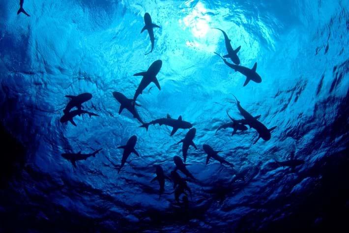 shark-swarm-shutterstock_2018-06-12.jpg