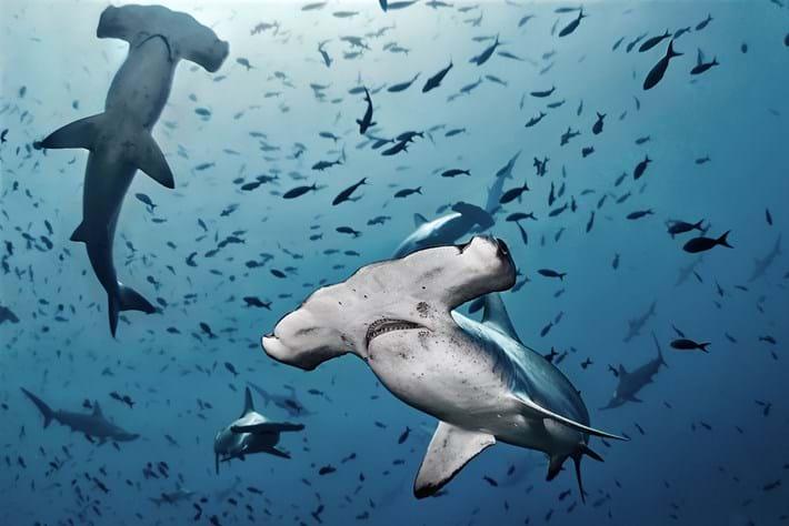 hammerhead-shark_2018-06-12.jpg