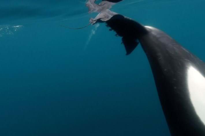 orca-stingray_2018-06-22.jpg