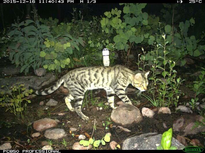 cat-on-the-hunt_2018-06-26.jpg