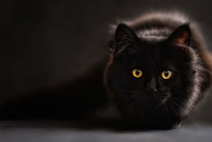 cat-page_image_2018-06-26.jpg