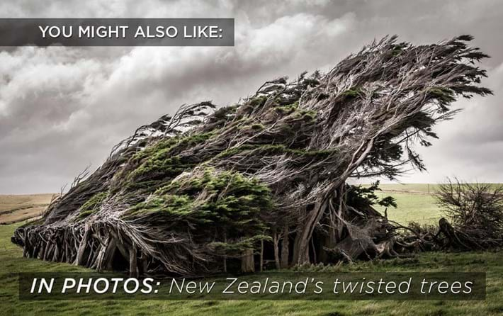 twisted_trees_2018-06-27.jpg