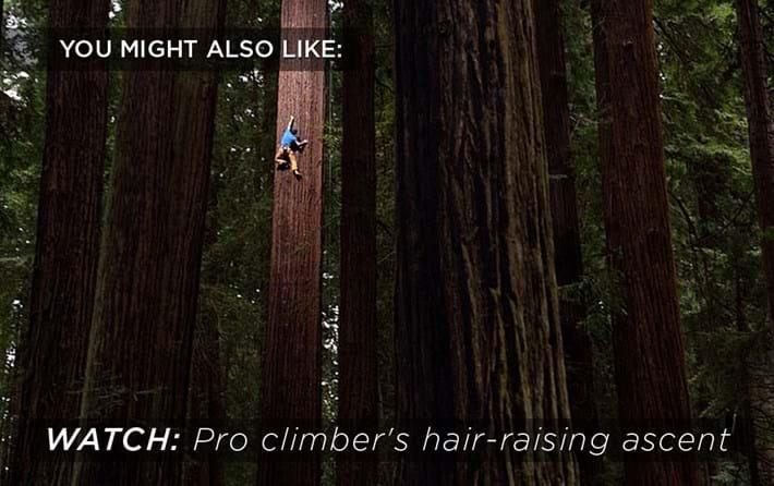climbing-sequoia_2018-06-27.jpg