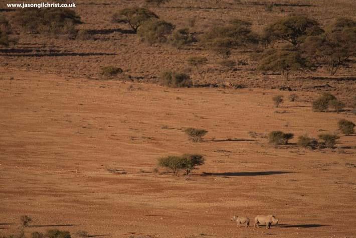 white-rhinos_2018-07-06.jpg