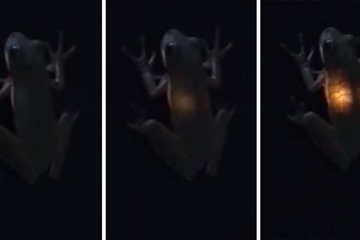 frog-glow_2018-07-13.jpg