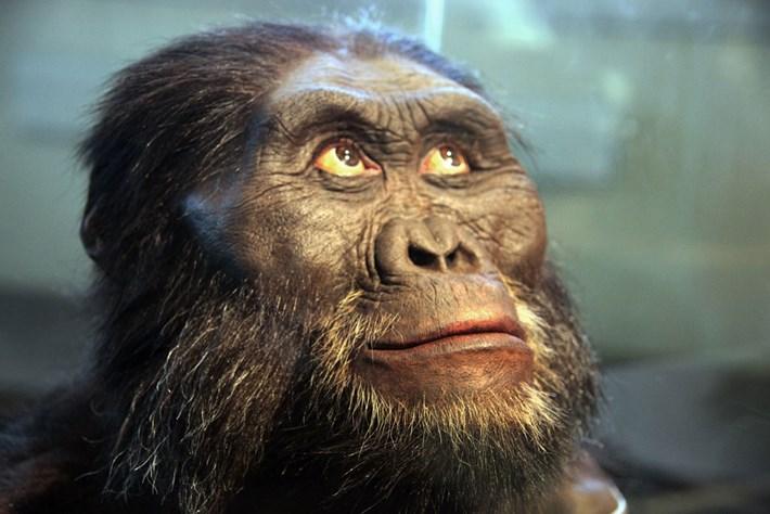 Australopithecus_2018-07-31.jpg