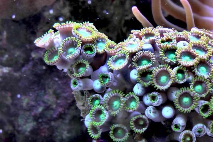 coral_2018-08-15.jpg