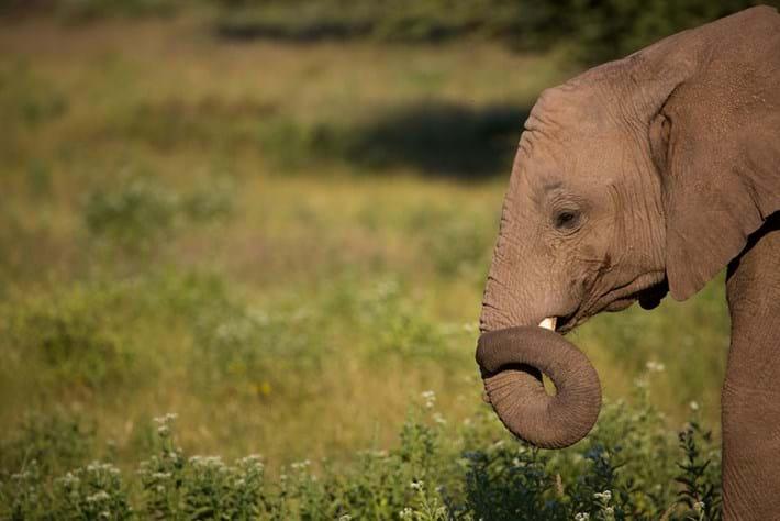 elephant_2018-07-21.jpg