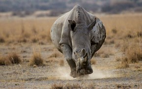 World Rhino Day Roundup: The good, the bad and the ugly