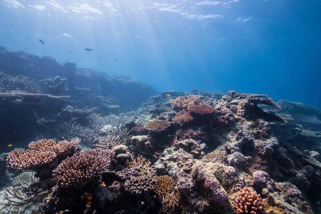 coral-reef_2_2018-10-24.jpg