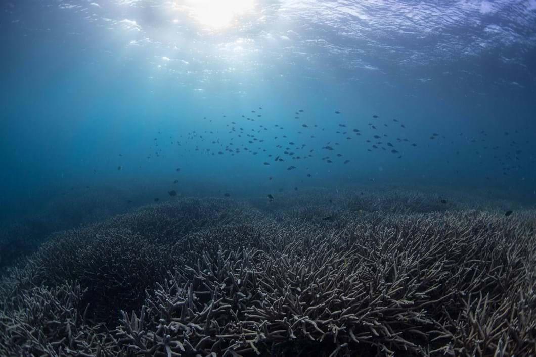 bleached-coral_2018-10-24.jpg