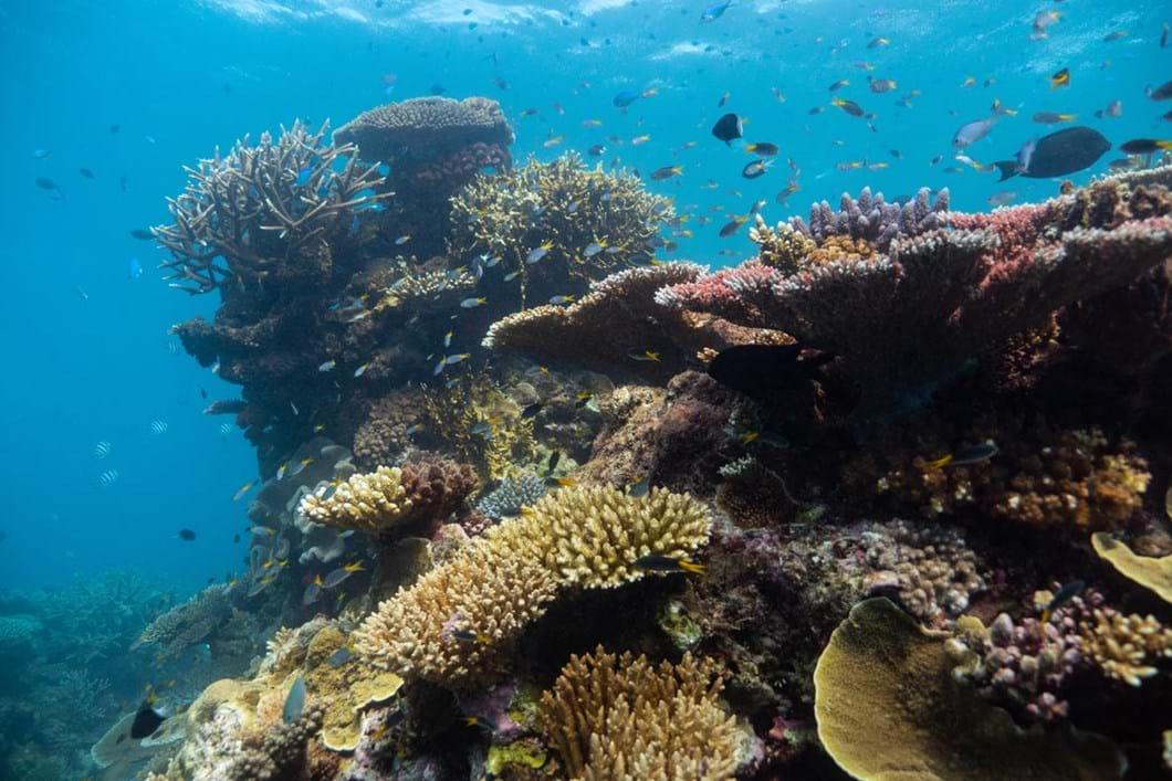 coral-reef_2018-10-24.jpg
