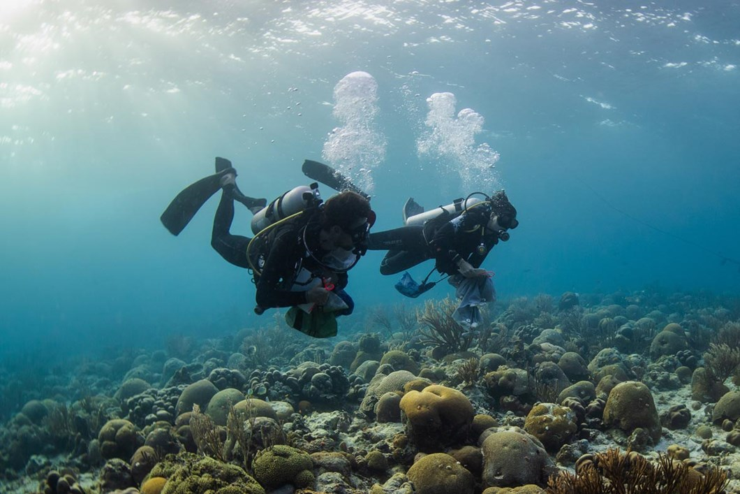 Chamberland-Houtepen-diving_2018-10-24.jpg