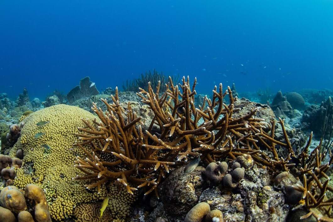 staghorn-coral_2018-10-24.jpg