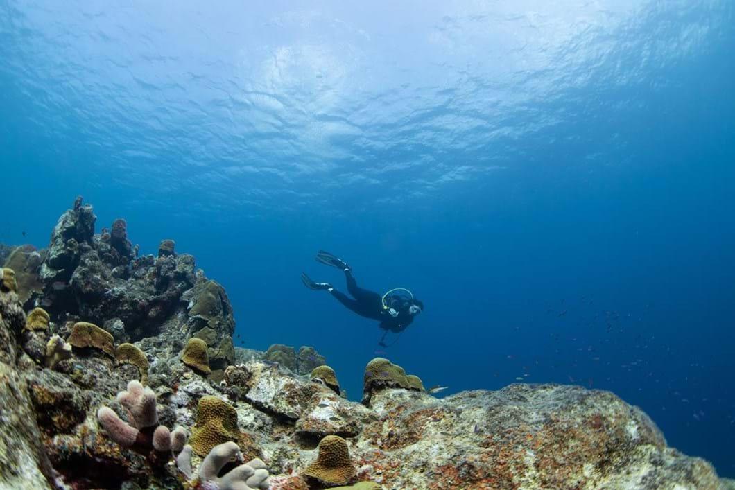 coral-diver_2018-10-24.jpg