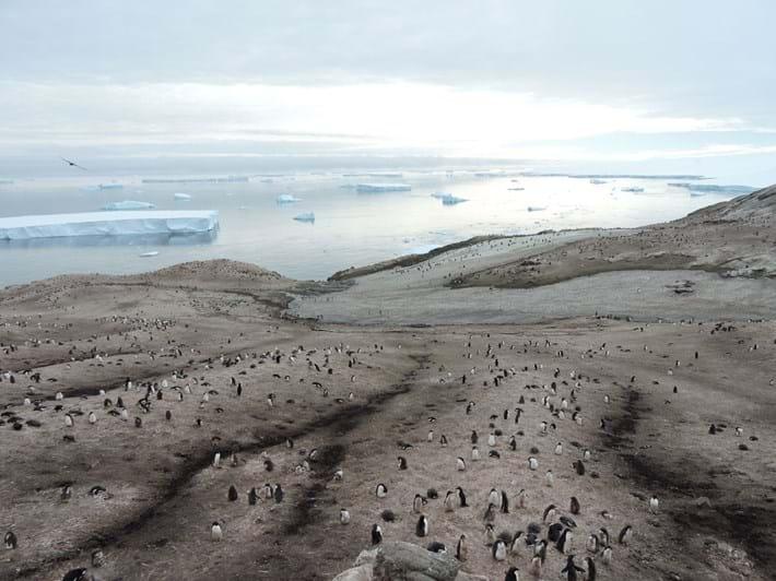 antarctica_2018-11-01.jpg