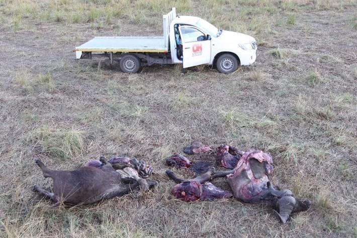buffalo-meat_2018-11-08.jpg