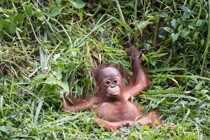 orangutan_2018-11-16.jpg