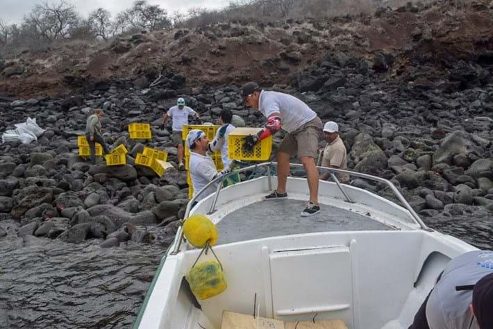 land-iguana-boat-release_2019-01-10.jpg