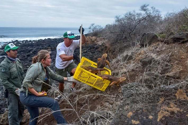 land-iguana-release_2019-01-10.jpg