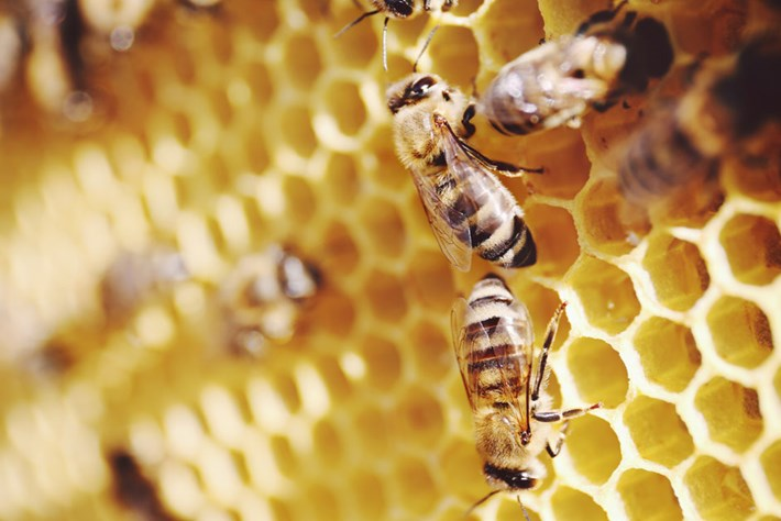 bee-honeycomb_page_2019-02-08.jpg