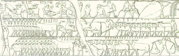 ancient-cattle-count_2019-02-08.jpg