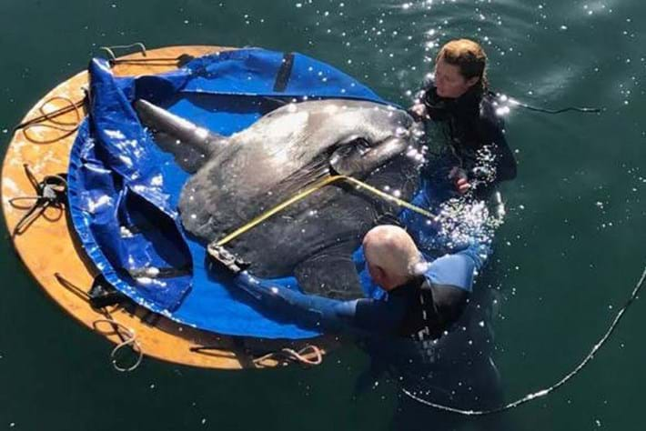 Watch: Stranded sunfish rescued from a dry dock in Cape Town