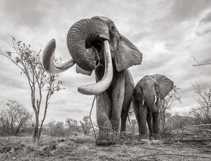 Kenya-elephant-tusker-4_2019-03-13.jpg