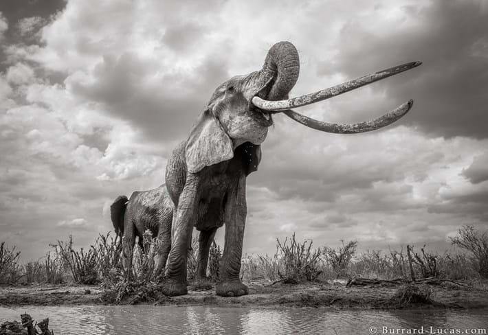 Kenya-elephant-tusker-5_2019-03-13.jpg